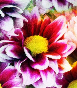 Ramneek Narang - Spring