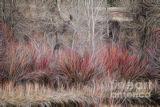 Spring Red Bushes by Yulia Kazansky