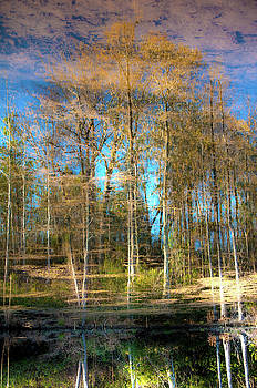 Spring Reflection by Kimberly McKinley