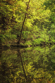Spring Reflections by Scott Bean