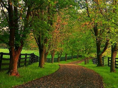 Spring Road by Joyce Kimble Smith