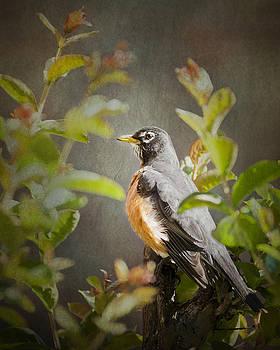 Spring Robin by Jeff Mize
