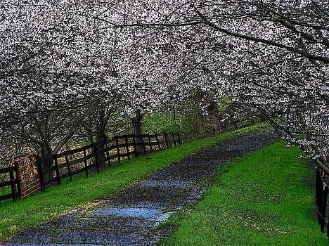 Spring Romance by Joyce Kimble Smith