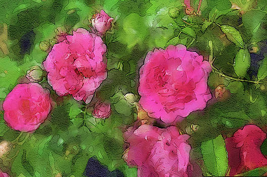 Spring Roses by Margie Middleton