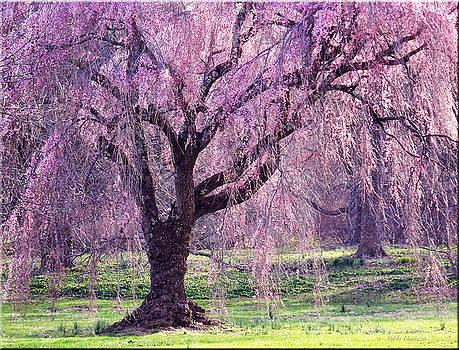 Spring Sensation by Mikki Cucuzzo