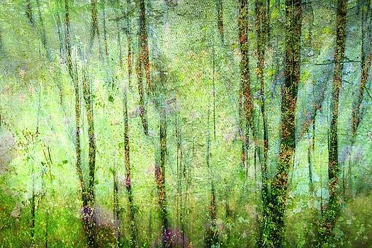 Spring In the Woods by Shirley Sirois