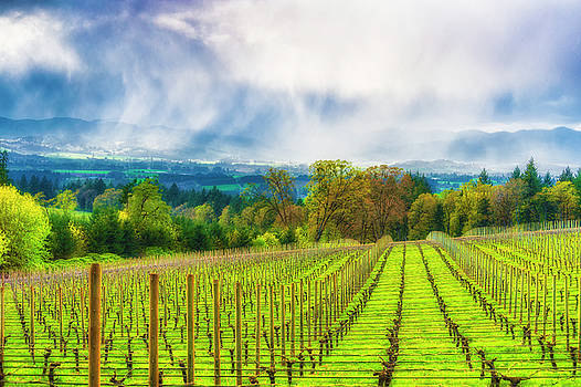 Spring showers in the Vineyards  by Dee Browning