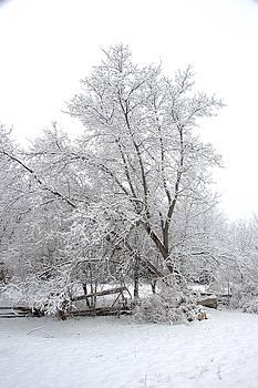 Valerie Kirkwood - Spring Snow 2
