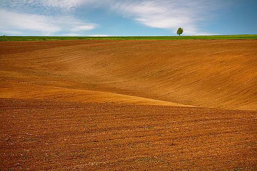 Spring soil by Evgeni Dinev