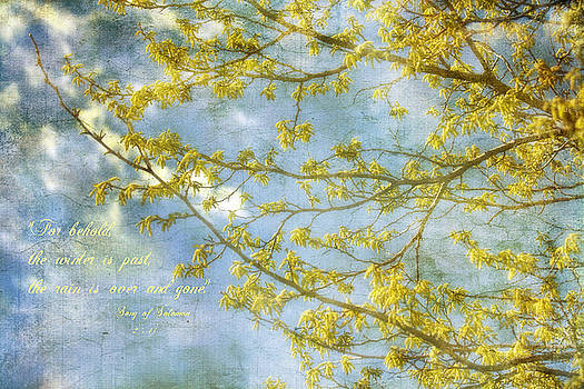 Spring Song by Joan Bertucci