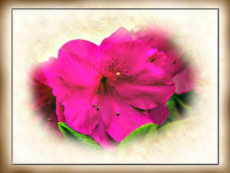 Barry Jones - Spring Splendor - Azalea Floral