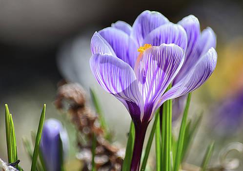Spring Splendor by Maria Keady