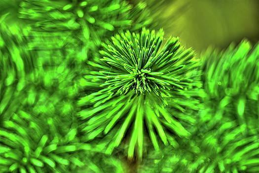 Dale Kauzlaric - Spring Spruce Branch