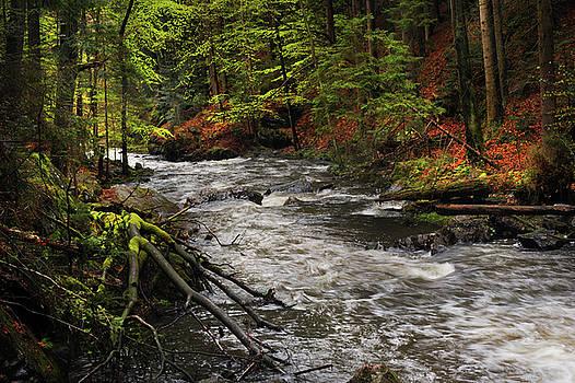 Jenny Rainbow - Spring Stream in Woods