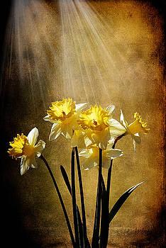 Lois Bryan - Spring Sun