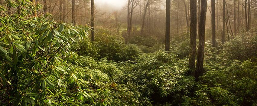 Spring Sunrise over Carolina Rhododendron Forest by Matt Tilghman