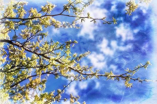 Spring Sunshine by Joan Bertucci