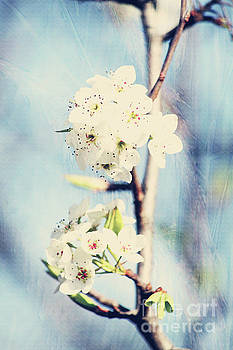 Spring Time by Inspirational Photo Creations Audrey Woods