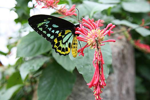 Spring time Butterflys by Reni Boisvert