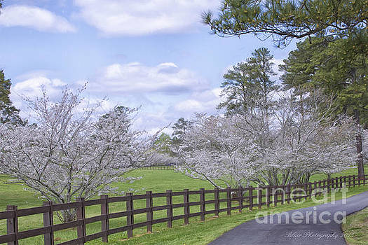 Spring Time Glory by Linda Blair