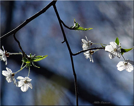 Spring tree blossoms 2 by Mikki Cucuzzo