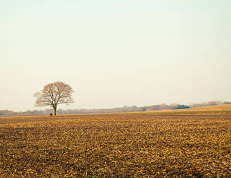 Spring Tree by Dan Lease