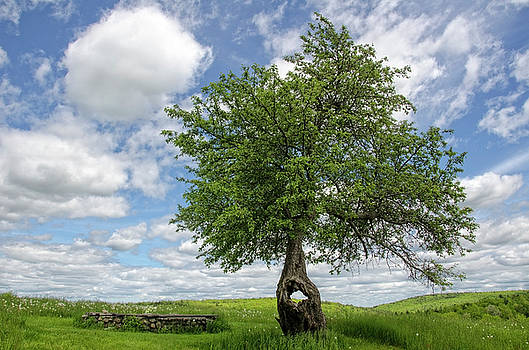 Spring Tree by Donna Doherty