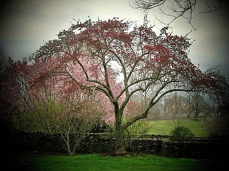 Spring Trees by Joyce Kimble Smith