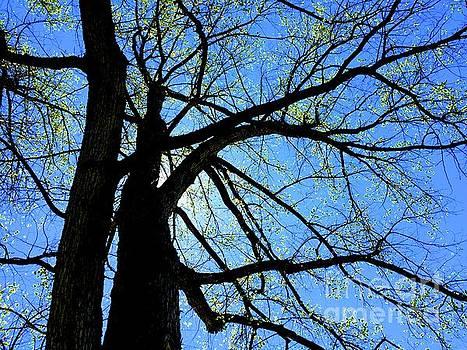 Spring trees  by Wonju Hulse
