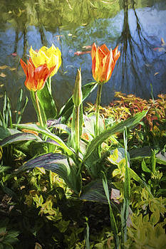 Spring Tulips at Lakeside  in Giverny  by David Smith