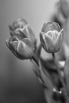 Elvira Pinkhas - Spring Tulips