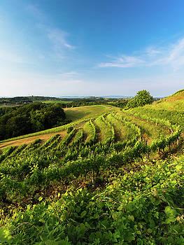 Spring vinyard by Davor Zerjav