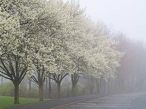 Spring Vision by Andrew Kazmierski
