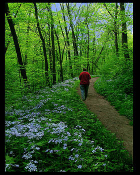 Spring Walker by Diana Ludwig