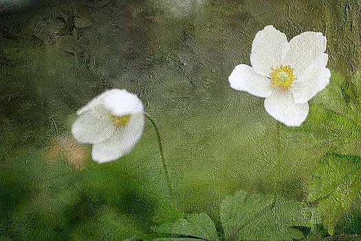 Spring White by Rebecca Cozart