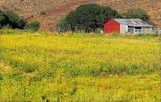 Spring Wild Flowers by Nabila Khanam