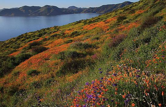 Spring wildflower season at Diamond Lake in California by Jetson Nguyen
