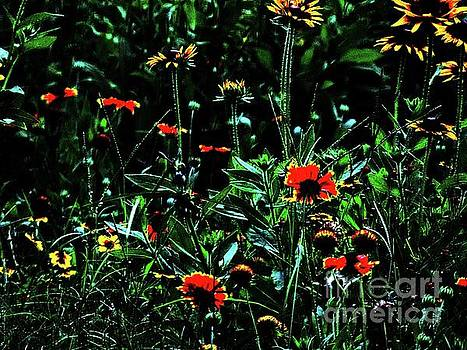 Spring Wildflowers by Donna Cain