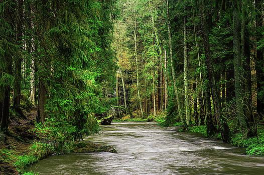 Jenny Rainbow - Spring Woods Greenery