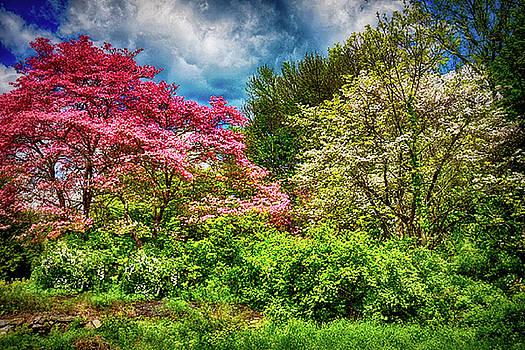 Springing Forward by Tricia Marchlik