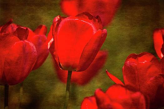 Springing Up Tulips by Karol Livote