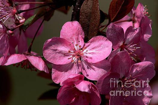 Springs Bloom by Roger Becker