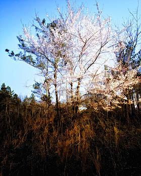 Springs First Bloom by Karen Fowler