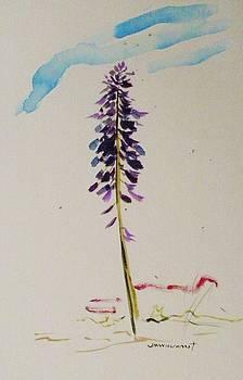 Spring's Purple Gem by John Williams