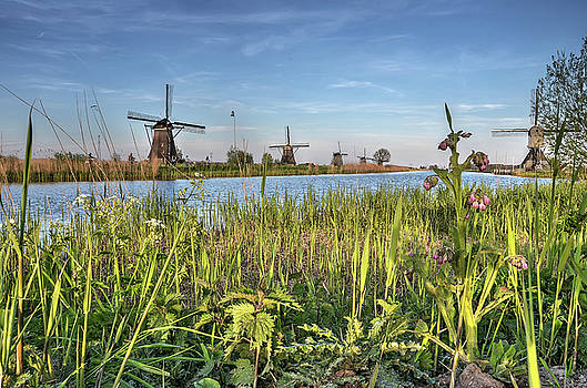 Springtime at Kinderdijk by Frans Blok