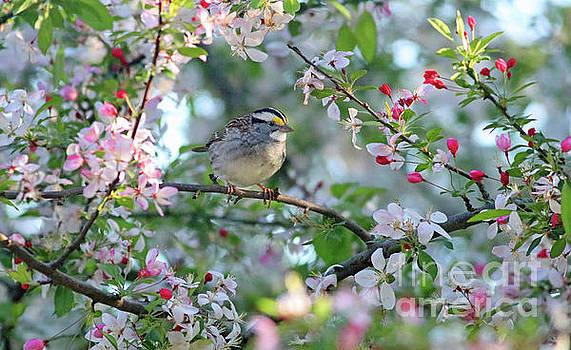 Springtime Beauty by Debbie Parker