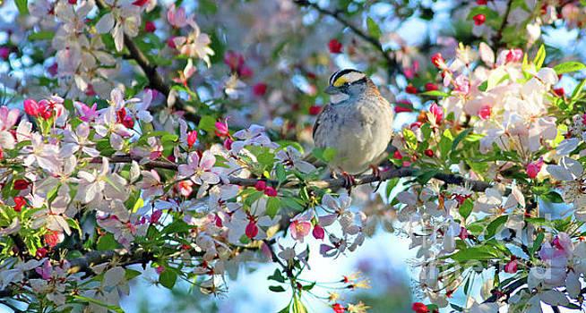 Springtime Beauty Too by Debbie Parker