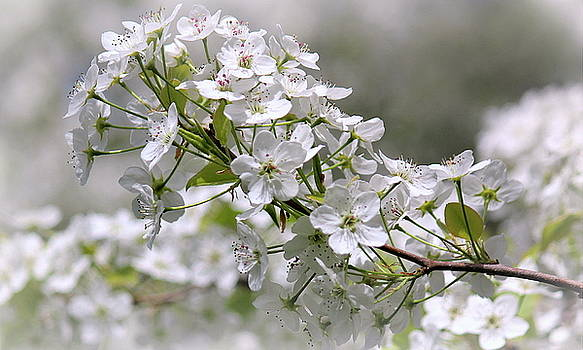 Rosanne Jordan - Springtime Blessing