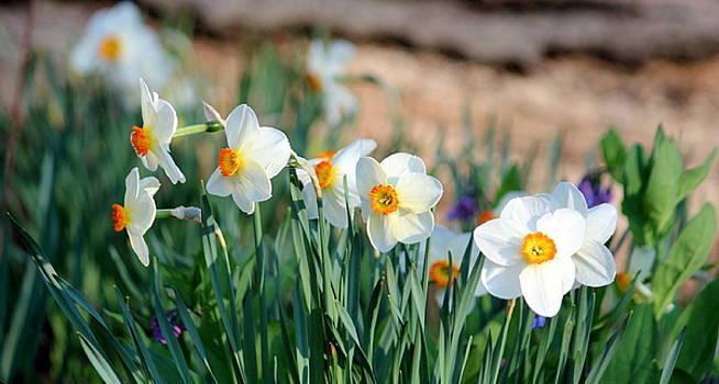 Rosanne Jordan - Springtime Bliss