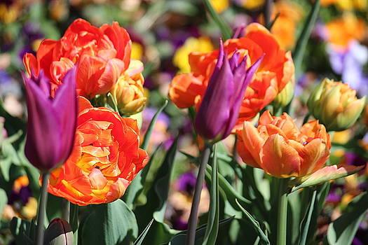 Rosanne Jordan - Springtime Color Splash
